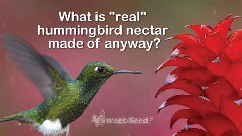 what is real hummingbird nectar made of anyway