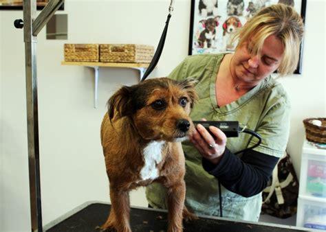 dog haircuts edmonton dazzling dogs grooming edmonton business story