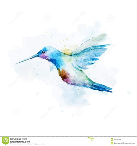 watercolor colibri bird stock vector illustration of