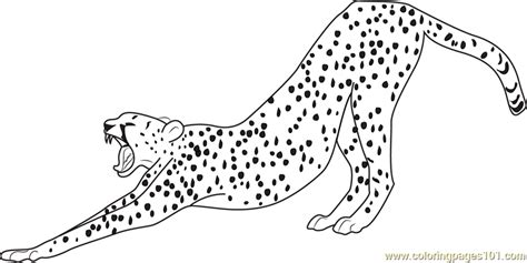 what color is a cheetah what color is a cheetah coloring home