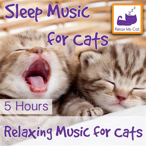 song 5 hours kitten music a song by relaxmycat on spotify