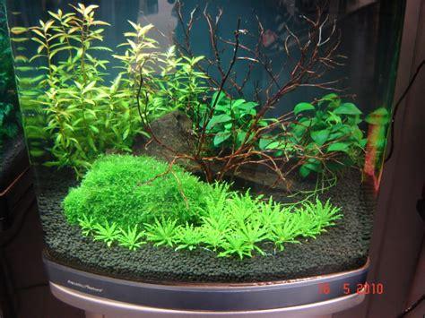 Evolution Aquasoil Aquatic Soil pro soil en shrimp soil aquatic nature zu erhalthen www aquacreative be