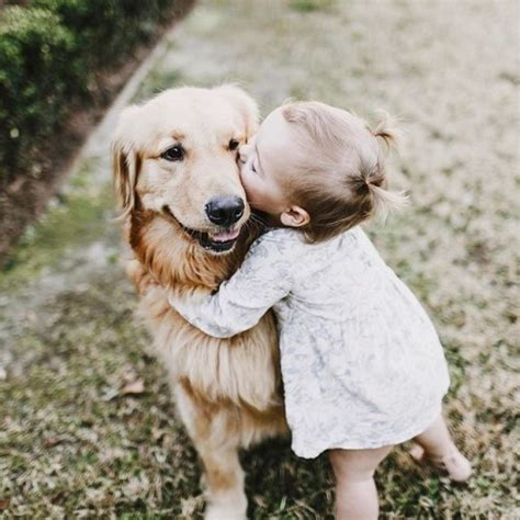 golden retriever with baby baby golden retriever