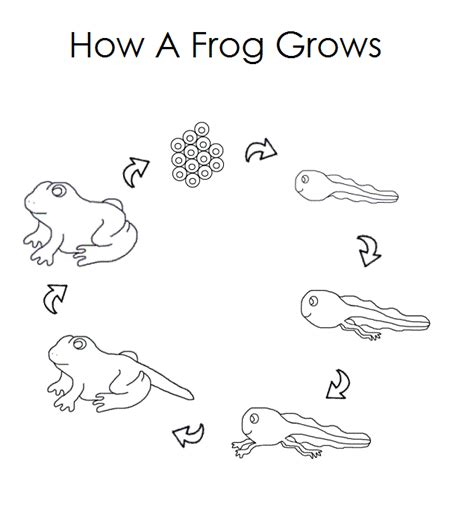 free coloring pages of tadpole eggs