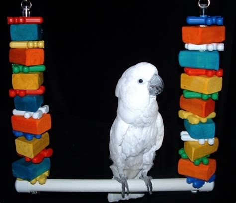 macaw swing 1000 images about bird toys for cockatoos and macaw