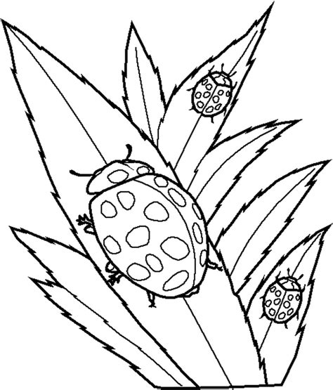ladybug coloring pages free printable ladybug coloring pages for