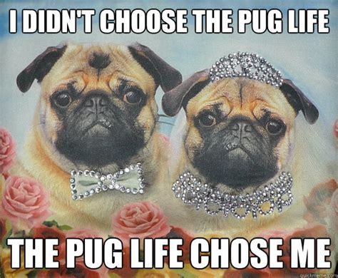 Pug Life Meme - i didn t choose the pug life the pug life chose me pug