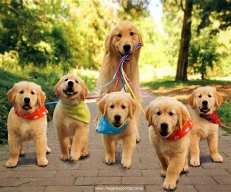 Imagenes Muy Bonitas De Animales | fotos bonitas de perros