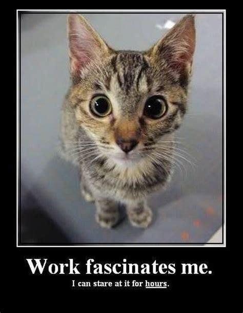 Working Cat Meme - work fascinates me cat meme animal funnies