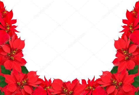 imagenes navideñas de nochebuenas marco de navidad de nochebuenas rojas foto de stock