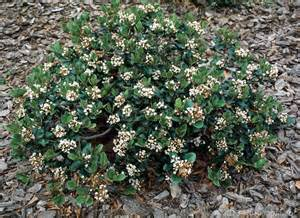 Flowering Bushes For Partial Sun - shrubs dooley landscape designs albuquerque