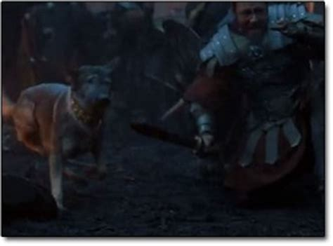 gladiator film dog reinvention the journal of a dog lover book reader