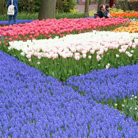 Types Of Blue Flowers Slideshow Types Of Garden Flowers