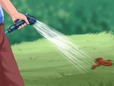 how to avoid snakes in backyard 100 how to avoid snakes in backyard how can i keep