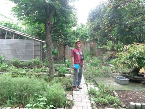growing vegetables in backyard backyard gardening and climate change greenpeace philippines