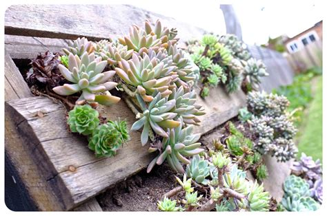 Vertical Succulent Garden Pallet The Urchin Collective Diy Recycled Pallet Vertical