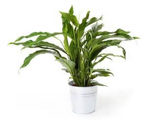 Plantas Con Flor De Interior