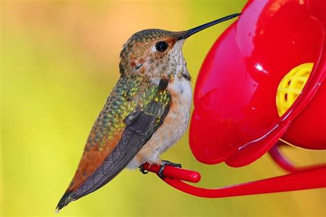 why you should make your own hummingbird nectar