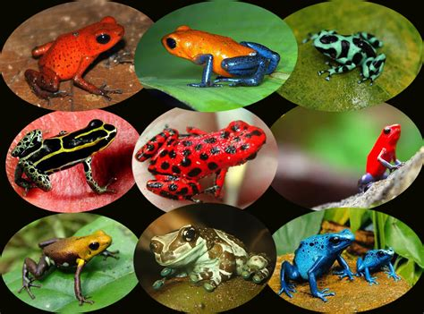 amazon river animals amazon river exotic travel destination