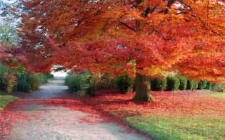 30 absolutely spectacular autumn wallpaper desktop blueblots