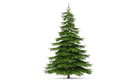 Enter To Win Christmas Money - enter to win a real christmas tree for life get it free