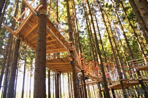 baumhaus konstruktion tree climbing and tree house building in