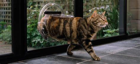 Cat Glass Door Cat Door Door Supplier Australia New Zealand Transcat