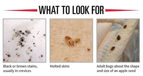 google bed bugs 1000 images about bedbug prevention on pinterest nymphs