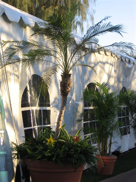 tropical plant rentals tropical plant groupings interiorscapes