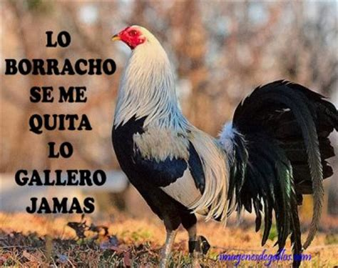 Imagenes Con Frases De Galleros | dichos de galleros con gallos giros para facebook