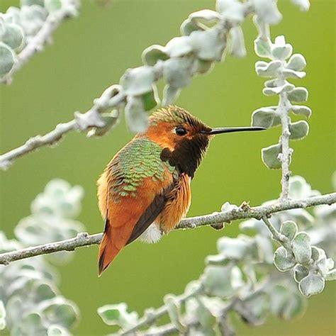 bird of the month wildbirdhaven net
