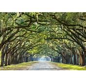 Car Rental Locations At Tampa Airport  Get Free Image