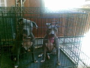 puppies for sale in winston salem nc all categories edencigaretsale