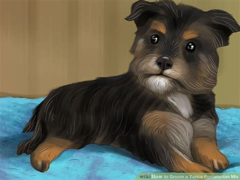 yorkie pomeranian mix hair cuts 4 ways to groom a yorkie pomeranian mix wikihow
