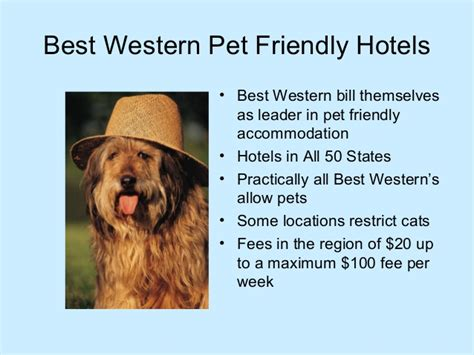 pet friendly hotels chains   usa