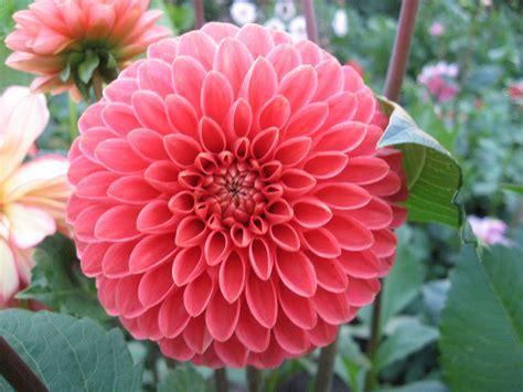 alle verschillende bloemen bloemblaadjes mensensamenleving me