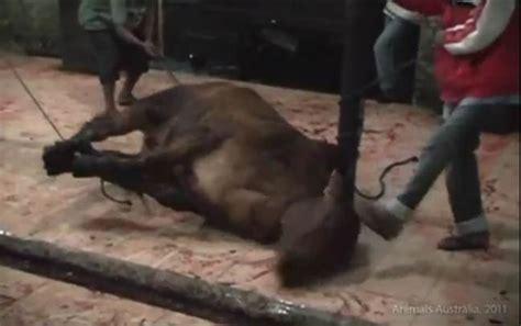 Skim Milk Australia Untuk Ternak may 2011 kelompok minat profesi veteriner ternak besar