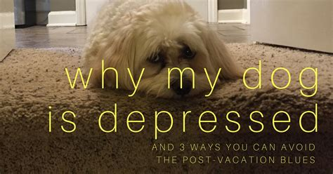 is my puppy depressed why my is depressed coach approach ministries
