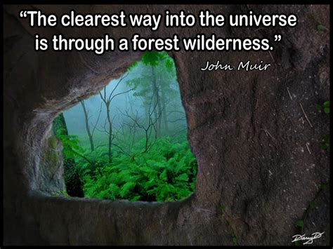 The Forest Would Be A Place Quote Forests Quotes Quotesgram