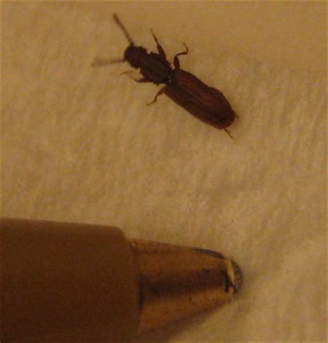 House Bugs by Bugs In House Help Id Yotatech Forums