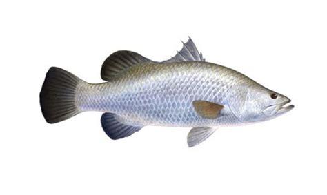 Ikan Bawal Segar jual ikan laut segar di jakarta jual ikan laut beku