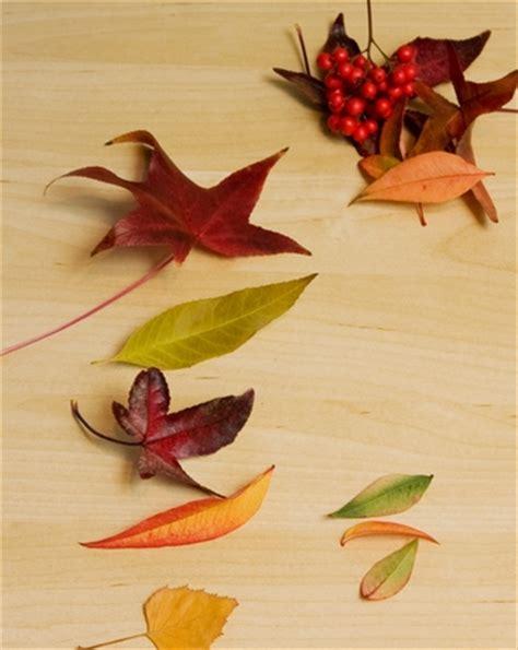 printable leaves for sorting leaf sort kindergarten worksheet leaf best free