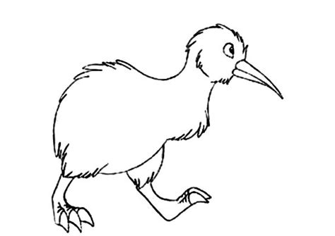 coloring page kiwi bird kiwi bird pages coloring pages