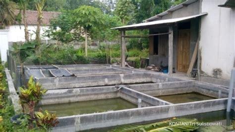 Lu Hias Malang mengail ikan manfish di kota kediri 1