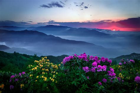 mountains flowers sunset mist clouds sky pink