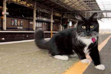 felix the railway cat books working railway mouse catcher finally catches a