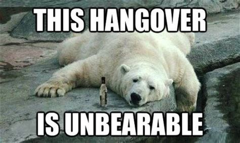 Hangover Meme - hangover funny meme www pixshark com images galleries
