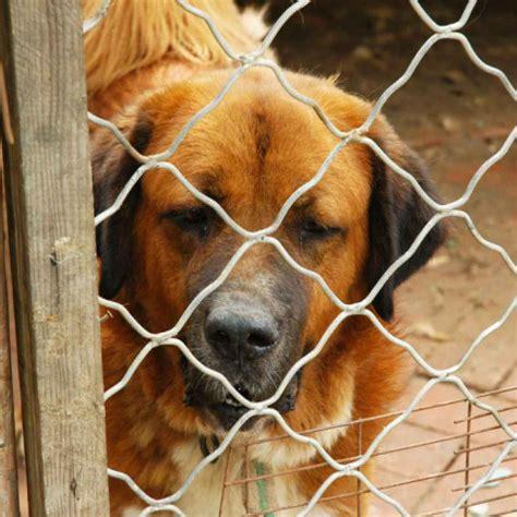 animali da gabbia animali fatemi uscire da questa gabbia cani