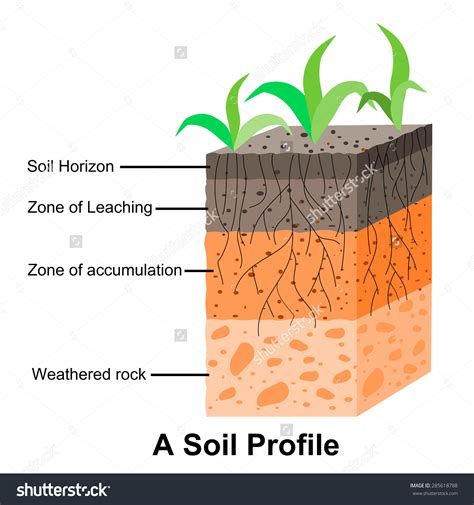 layers of the soil diagram soil pictures clip 62