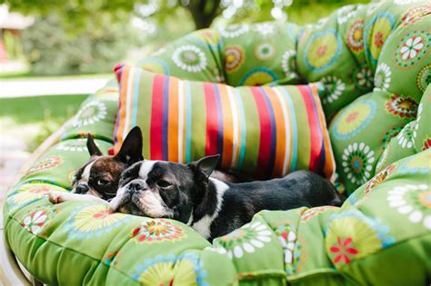 12 Hacks to Make Your For Sale Home Look and Smell Pet